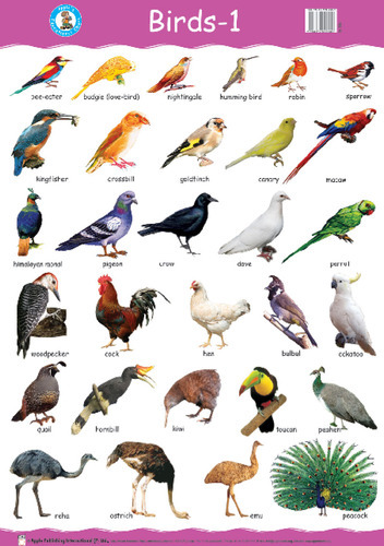 Birds Images With Name And Information In Hindi
