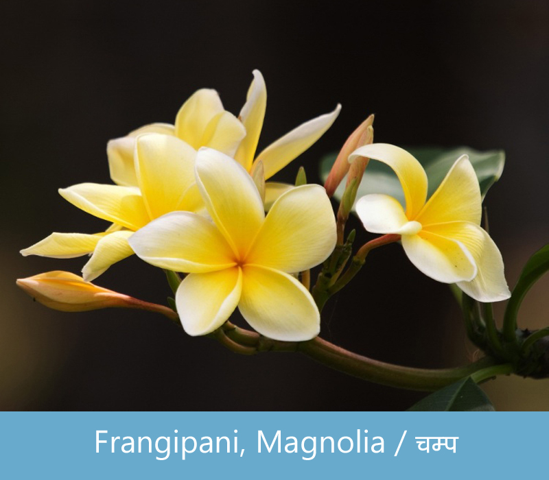 Flowers Name In Hindi With Images फल क नम Hind