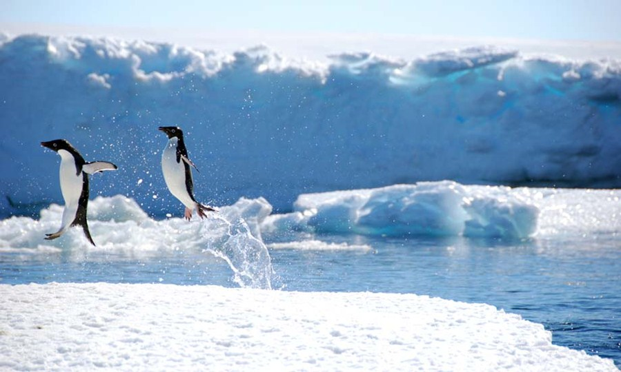 wildlife-in-antarctica