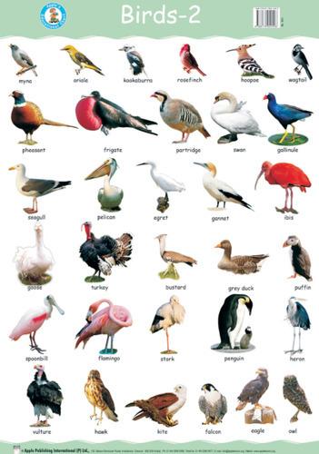 Birds Name in Hindi