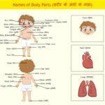 Body Parts in Hindi | शरीर के अंगो के नाम हिंदी व अंग्रेजी में
