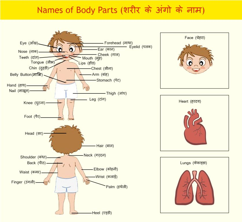Body Parts in Hindi