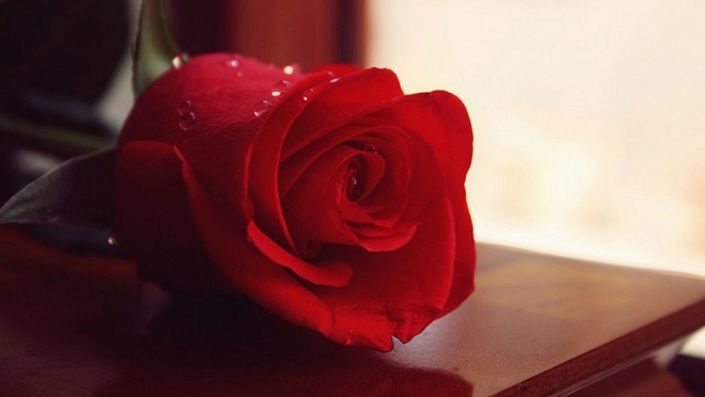Happy Rose Day Messages in Hindi