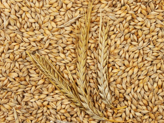 Essential Minerals Found in Barley in Hindi