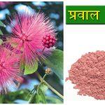 Praval Pishti | प्रवाल पिष्ठी